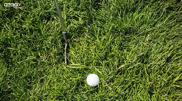 the rough area in a golf course